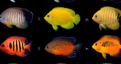 Рибите си имат домашни любимци